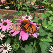 Wow! at the Beechcreek Botanical Gardens – June 2017